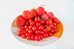 Ribes rosso, fragole e lamponi delle bacche su un piatto Immagine Stock