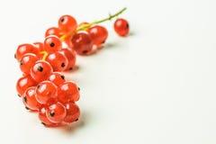 Ribes rosso su una tavola Fotografie Stock Libere da Diritti