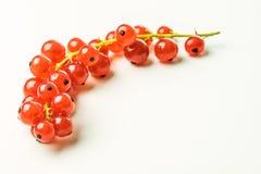Ribes rosso su una tavola Fotografia Stock