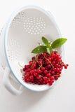 Ribes rosso in una colapasta Immagini Stock Libere da Diritti