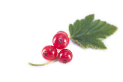 Ribes rubrum isolated Stock Images