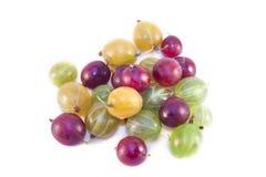 Ribes uva-crispa Obrazy Royalty Free