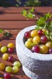 Ribes uva-crispa agresty Obraz Stock