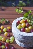 Ribes uva-crispa agresty Fotografia Stock