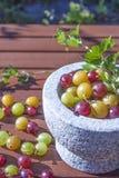 Ribes uva-crispa agresty Zdjęcia Stock