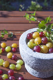 Ribes uva-crispa gooseberries Stock Photography