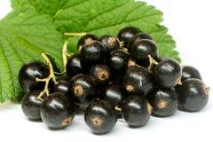 Ribesdivaricatum, svart vinbär med bladet på vit Arkivbild