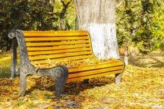 ribnjak för bänkcroatia park Royaltyfri Foto