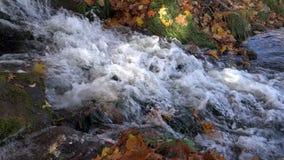 Ribollendo i chiari scorrimenti dell'acqua freschi puliti dalle montagne miste con giallo e le foglie verdi e le cadute nel lago video d archivio