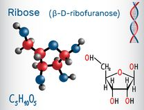Ribose β-D-ribofuranose molecule, it is a pentose  Royalty Free Stock Photos