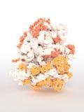 Ribosome Photo stock