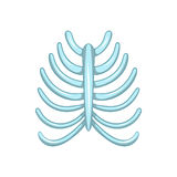 Ribs icon, cartoon style. Ribs icon in cartoon style isolated on white background. Human bones symbol Stock Photo