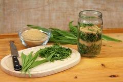 Ribwort plantain / Plantago lanceolata/ syrup Stock Images