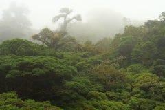 rica de forêt de côte de nuage Photo libre de droits
