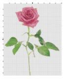 Ricami il fiore per le mani di un ricamo un incrocio Fotografie Stock Libere da Diritti