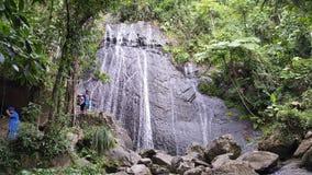 rican puertorainforest Arkivbilder
