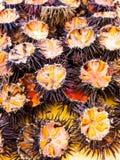 Ricci di mare (oursins) Photographie stock libre de droits