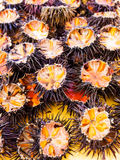 Ricci di mare (sea urchins) Royalty Free Stock Photography