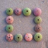 Ricci di mare sul blocco per grafici bagnato della sabbia Immagini Stock Libere da Diritti