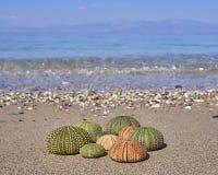 Ricci di mare variopinti sulla spiaggia Immagini Stock Libere da Diritti