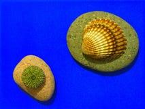 Riccio di mare e Shell Immagine Stock