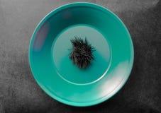 Riccio di mare inaridito il nero in piatto verde che ha disposto sulla superficie nera del fondo Fotografie Stock Libere da Diritti