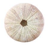 Riccio di mare Shell Fotografie Stock