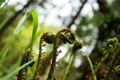 Riccioli di verde Fotografie Stock Libere da Diritti