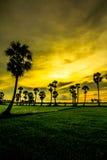Ricciolo della palma Immagini Stock