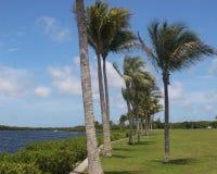Ricciolo della palma di Florida che soffia nella brezza fotografie stock