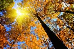 Ricciolo di autunno con luce solare Fotografie Stock Libere da Diritti