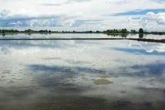 Rice śródpolny pełny woda Obrazy Royalty Free