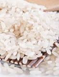 rice Royaltyfria Bilder