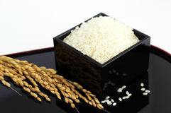 Rice. In the black lacquered measure Stock Photography