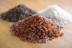 Rice Royaltyfri Fotografi