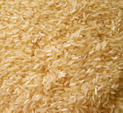 Rice. Precooked rice Stock Image