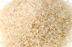 Rice. Asia's new production of rice Royalty Free Stock Photo