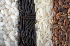 Rice. Different sorts of rice, macro Royalty Free Stock Photography