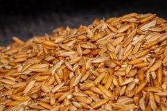 Rice adra z plewami Obrazy Royalty Free
