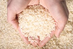 Rice in hand stock image