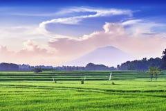 Rice And Volcano Stock Photo
