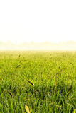 Rice. Auroral Resumption Start Sum Present day Tomorrow Holiday The next day Holy days Rice Gold Field stock photos
