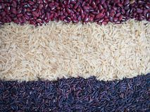 Rice background Gluten free grains. Rice Red bean Purple rice Rice BerryGluten free grains abstract background Royalty Free Stock Photography