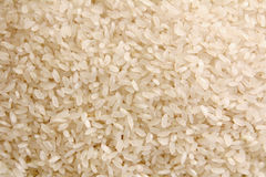 Rice background Stock Image
