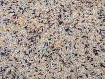 Rice background texture. Royalty Free Stock Photos