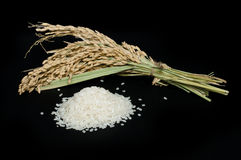 Rice baldo and branch Stock Photos