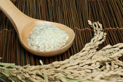 Rice baldo in wooden spoon Royalty Free Stock Photography