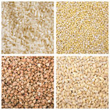 Rice barley buckwheat millet Royalty Free Stock Images
