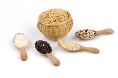 Rice berries, jasmine rice, brown nose, pile of unmilled rice grains, rice, and five species Royalty Free Stock Photo