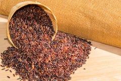 Rice berry Stock Image